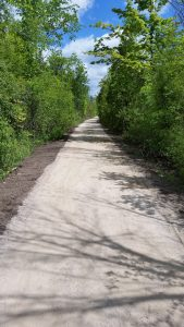 trail with trees on Caledon trailway