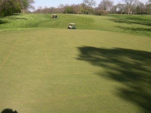 golf carts on fairway and golf green