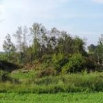 return this 1 ha site back into usable land and planted 100 trees to replace the ones that were lost